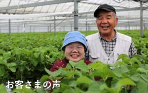 ご利用者の声 アルム農材 有機肥料 無農薬 漢方資材