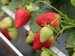 アルム農材 有機肥料 無農薬 漢方資材