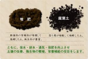 堆肥と腐葉土って何が違うの?